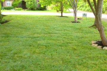 Lawn Care and Landscapes